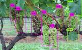 No futuro robôs vão identificar as plantas no campo