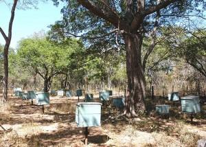 apicultura - sombreamento