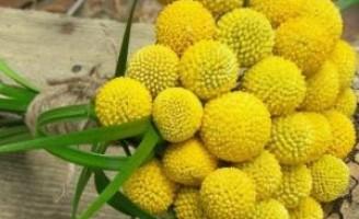 Um mês de beleza e perfume na maior exposição de flores do Brasil