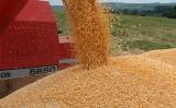 Aumento na produtividade de grãos deve elevar a safra brasileira em 30%