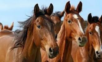 Cuidados recomendados para imunizar os cavalos