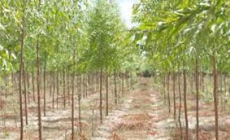 Qualquer brasileiro pode dar opinião sobre qual a melhor forma de ampliar a área de floresta no pais