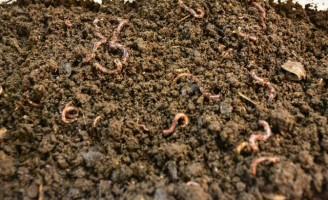 Como fazer um minhocário  para produzir húmus na propriedade
