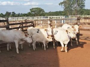 vacas sombreado