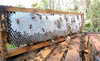 A produção de mel ajuda a melhorar a renda do agricultor