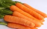 Uma semente de cenoura pronta para cultivo no verão