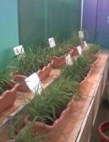 Um projeto vai indicar ao produtor rural a forrageira certa para ser plantada na fazenda