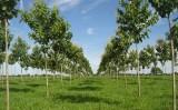 Importância do reflorestamento para recuperar áreas degradadas na propriedade