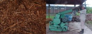 residuos do coqueiro triturado