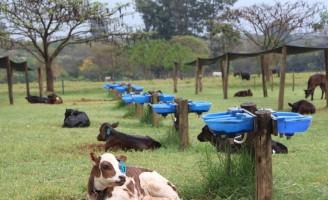 Humidade e calor provocam o aumento da diarreia em bezerros