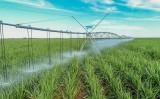 Especialistas apostam em aumento de canaviais irrigados em 2019