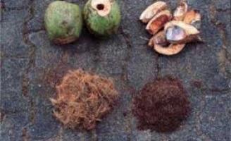 Valorizando a casca do coco verde para aumentar a renda do produtor