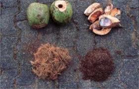 casca do coco verde