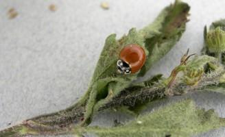 Controle biológico de pragas facilita a vida do produtor rural