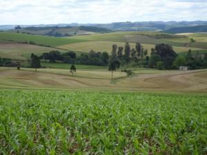 paisagem rural 1