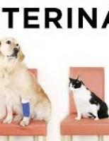 Agora é obrigatória a contração de um médico veterinário nas lojas comerciais de animais vivos, em Pernambuco