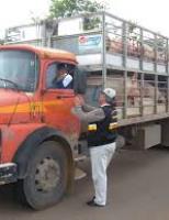 Ministério da Agricultura quer mais rigor na fiscalização do transporte de cargas de animais vivos