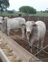 Aditivos tamponantes podem aumentar a eficiência produtiva dos animais