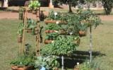 Aprenda a fazer sua própria horta caseira e agroecológica