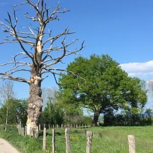 árvore - cavalho da vida e da morte na frança