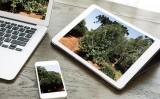 Produtores de erva-mate terão ajuda de um aplicativo especial
