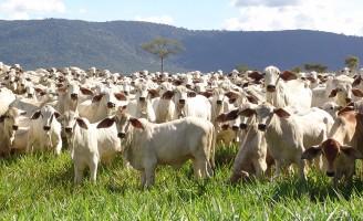 Bovinos precisam de suplementação alimentar especial nos períodos de seca