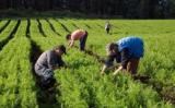 Pequenos, médios e grandes produtores já podem contar com o plano safra 2019/2020