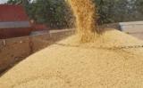 Caem as vendas do agronegócio brasileiro para o exterior