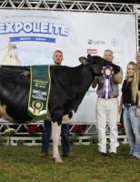 As vacas campeãs da 47ª Expoleite