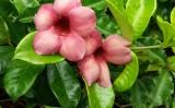 As flores da serra pernambucana