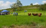 Sistema permite que gado ganhe peso mesmo em períodos de seca