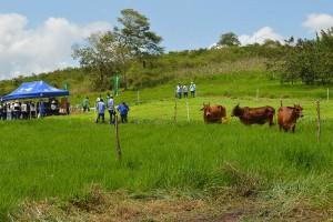 técnicos no campo com boi no pasto