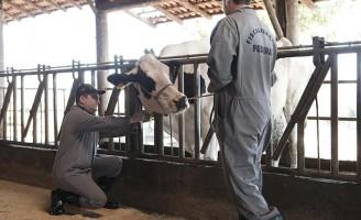 A importância do Médico Veterinário para a segurança alimentar e o agronegócio