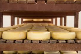 produção de queijo