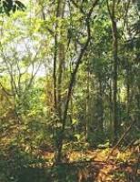 Um estudo assegura que o desmatamento está entre principais causas de surtos de doenças infecciosas em humanos