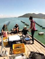 Criação de moluscos no mar de Santa Catarina não provoca prejuízos ambientais