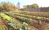 Horta comunitária é inaugurada por crianças de uma creche