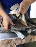 Para aprender a curtir pele de peixe em casa