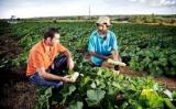 Ministra diz que assistência técnica para pequeno produtor será prioridade em 2020