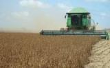 Safra brasileira de grãos deve ter novo recorde este ano