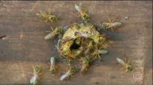 abelha no curtiço