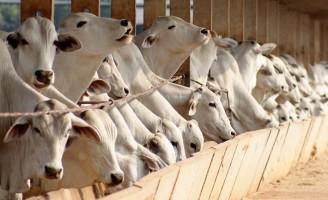 Cresce o número de animais em regime de confinamento no Brasil