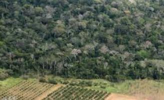 Programa vai estimular a ampliação de áreas com florestas plantadas no Brasil