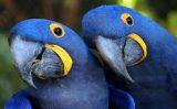 """Conheça algumas das aves consideradas """"românticas"""" na fauna brasileira"""