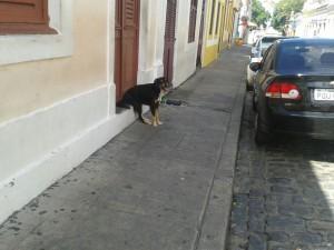 Cachorro senta na porta para ver Olinda passar