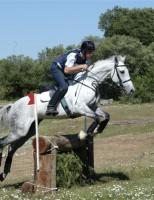 Um breve comentário sobre a história da Equitação