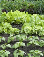 Aprenda a controlar o ataque de pragas e outras doenças na horta