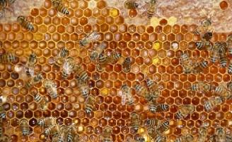 Encontro nacional vai debater a cadeia produtiva do mel