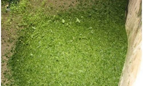 """<h2><a href=""""http://nordesterural.com.br/uso-do-silo-para-alimentar-os-animais-em-epoca-de-seca/"""">Uso do silo para alimentar os animais em época de seca</a></h2>Diferentes tipos de forrageiras podem ser usadas para se fazer a silagem tais como capim, girassol, alfafa e cana. Animais que produzam até 12 litros de leite por dia podem"""
