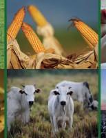 Agronegócio brasileiro ganha o mercado de 11 países